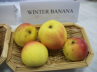 Diverses variétés de pommes à couteau; - Page 4 Photo413