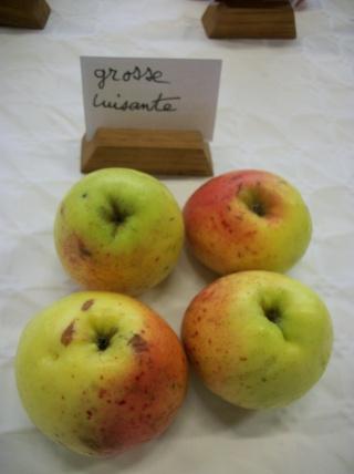 Diverses variétés de pommes à couteau; - Page 4 Photo414