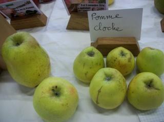 Diverses variétés de pommes à couteau; - Page 4 Photo415