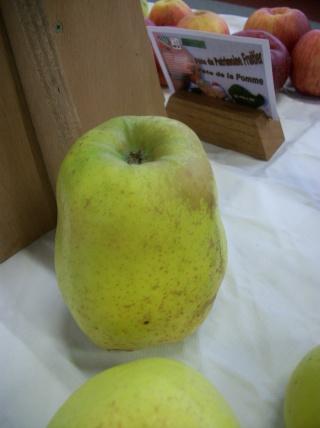 Diverses variétés de pommes à couteau; - Page 4 Photo416