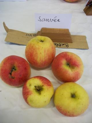 Diverses variétés de pommes à couteau; - Page 4 Photo417