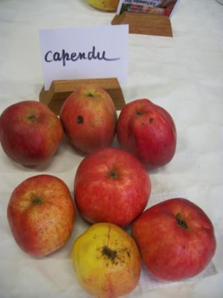 Diverses variétés de pommes à couteau; - Page 4 Photo418