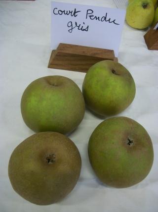Diverses variétés de pommes à couteau; - Page 4 Photo419