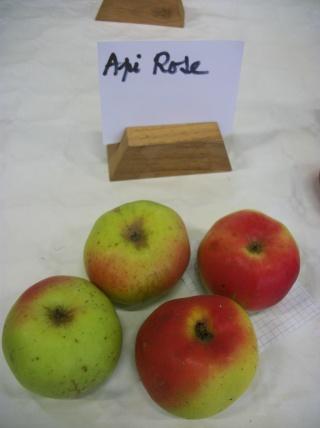 Diverses variétés de pommes à couteau; - Page 4 Photo420