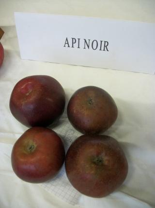Diverses variétés de pommes à couteau; - Page 4 Photo421