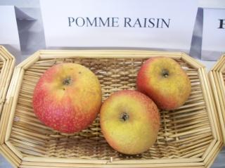 Diverses variétés de pommes à couteau; - Page 4 Photo422