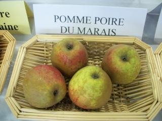 Diverses variétés de pommes à couteau; - Page 4 Photo423