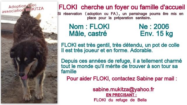 FLOKI, M-X Colley, né 2006, 15 kg - Il est extraordinaire (BELLA) - En FA Takine40 (départ40) Fiche_11