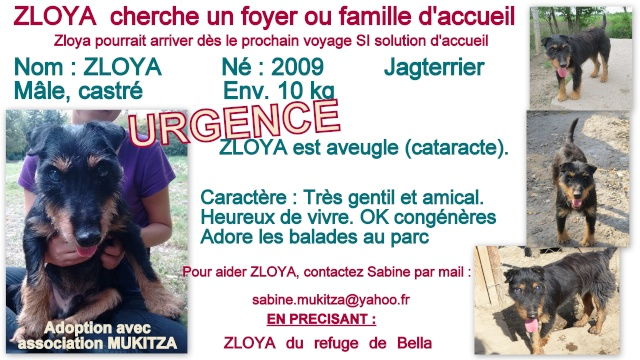 ZLOYA, M-Type Jagterrier, né 2009, 10 kg, aveugle (BELLA) - En FA chez Corinne91(départ91) Fiche_31