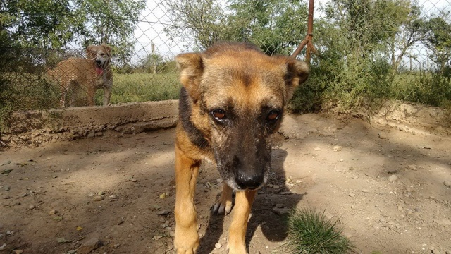 PEEPEE - Née 2004 - 22 kg -mamie très touchante - BELLA/Parrainée/Réservée refuge partenaire asso Mukitza Peepee10