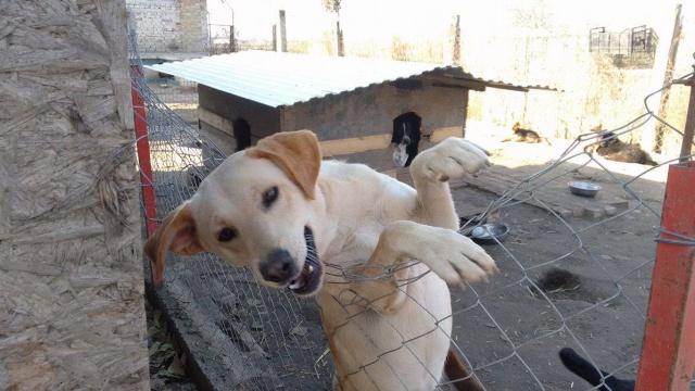 bella - WHITE -  2014 - 10 kg - Un gentil loup - (BELLA)/ URGENT : PEUT ARRIVER ! White_10