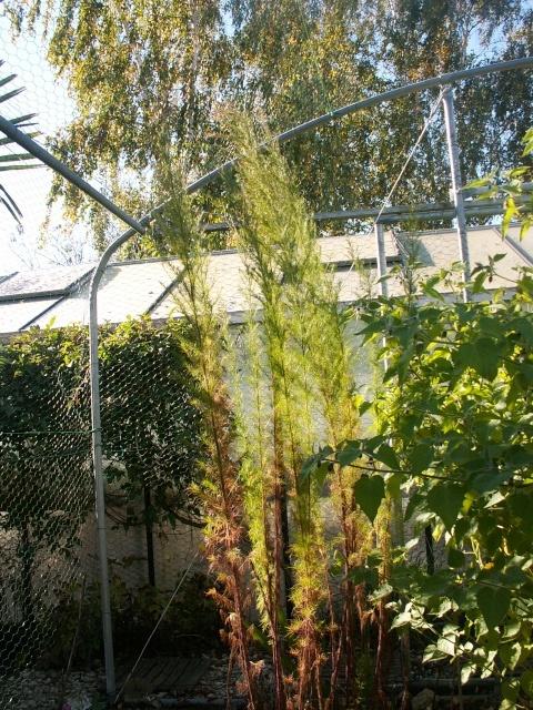 derniers sursauts du jardin Cormil15