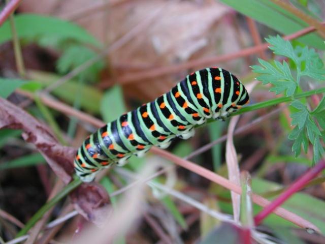 fil(et) à papillons - Page 8 Dscn5410
