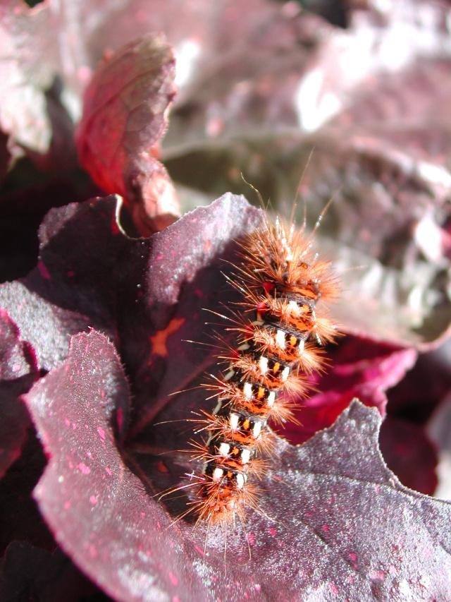 fil(et) à papillons - Page 8 Dscn5412