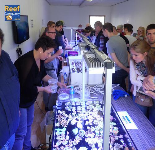 Frag swap 3/10/15 Belgian & Dutch seawater @ Reefcompany   Img_2010