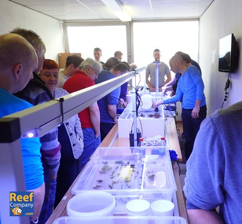 Frag swap 3/10/15 Belgian & Dutch seawater @ Reefcompany   Pa030610