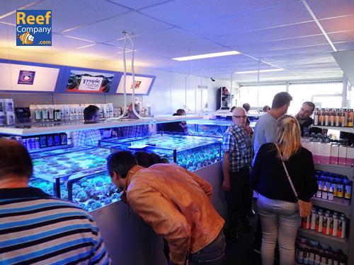 Frag swap 3/10/15 Belgian & Dutch seawater @ Reefcompany   Pa030614