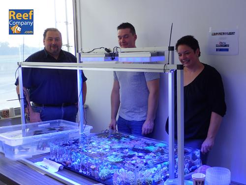 Frag swap 3/10/15 Belgian & Dutch seawater @ Reefcompany   Pa030619