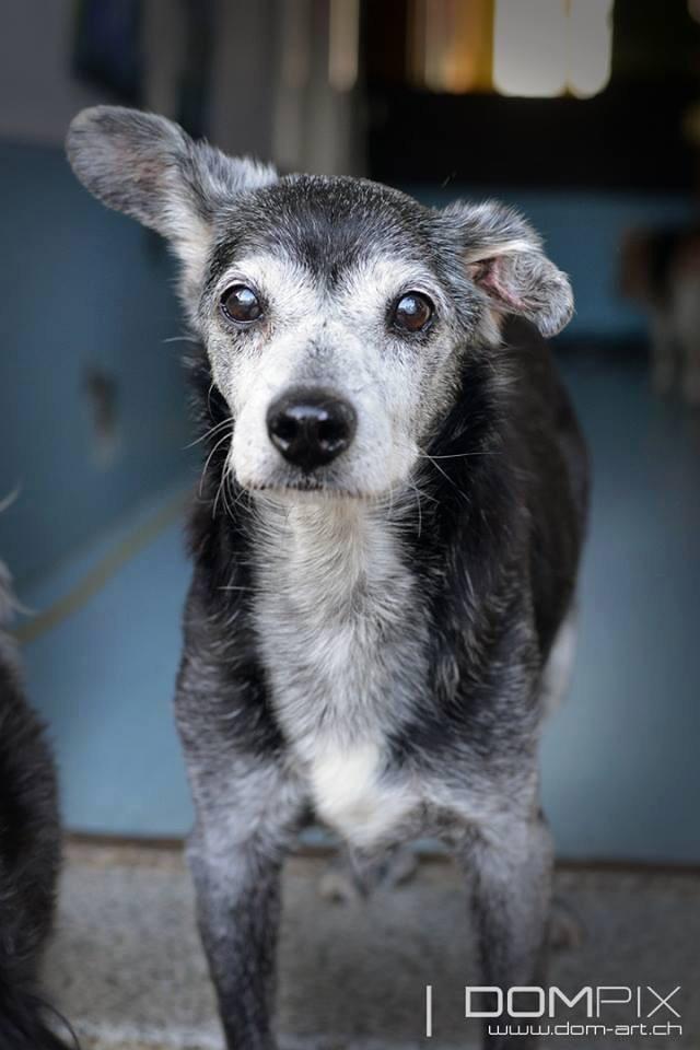 Floppy: le + vieux chien du monde pourrait être suisse! Image68