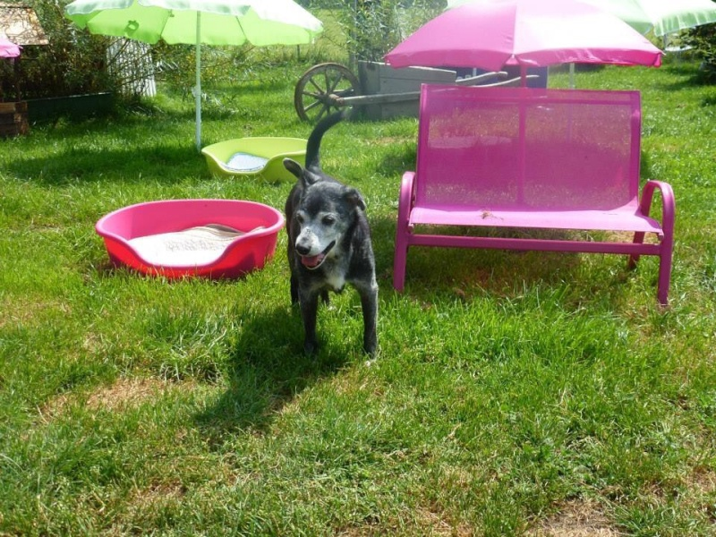 Floppy: le + vieux chien du monde pourrait être suisse! Image70