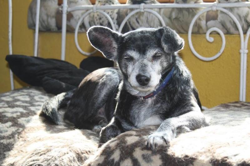 Floppy: le + vieux chien du monde pourrait être suisse! Image71
