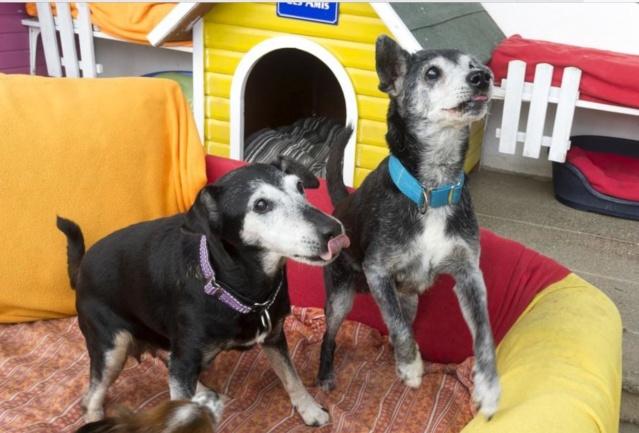 Floppy: le + vieux chien du monde pourrait être suisse! Image74