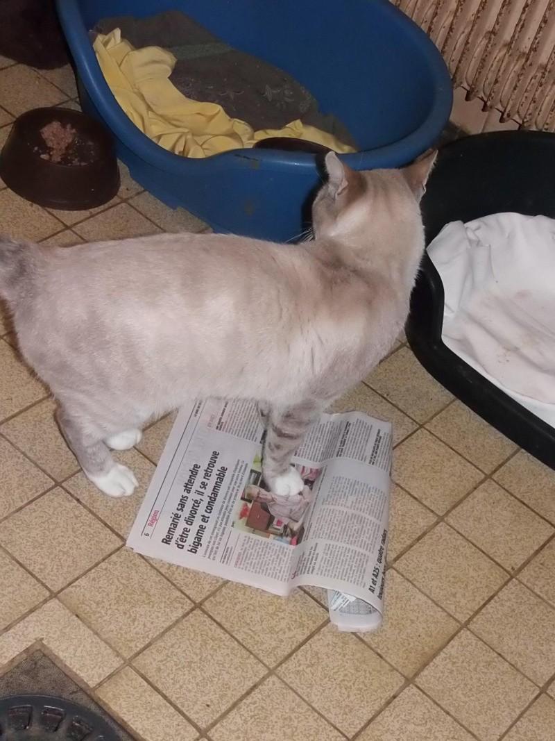 La devinette du mois : Quelle est la robe de ce chat ? - Page 9 12124210
