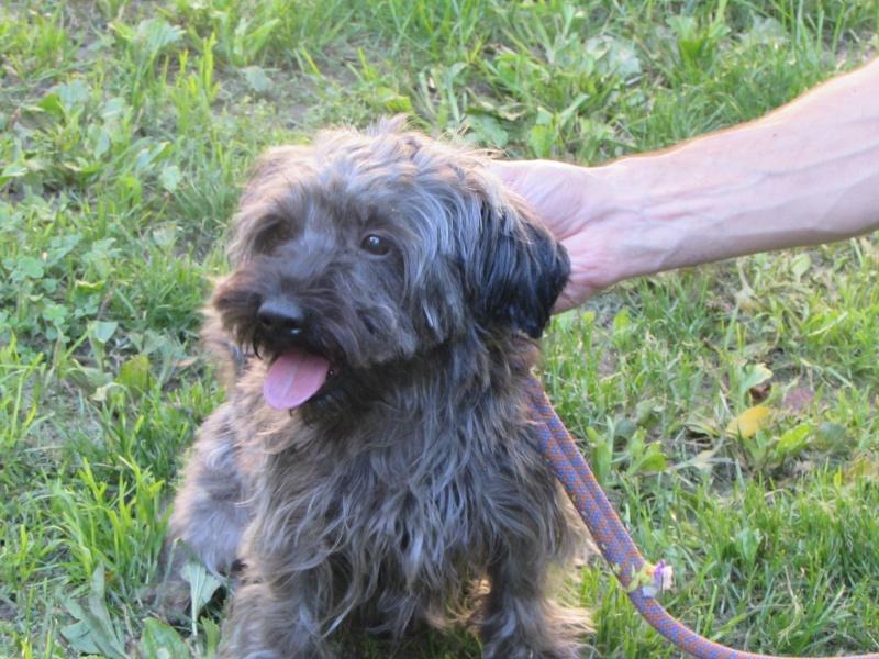 GASPAR chien 01515