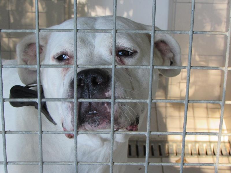 KAYA Femelle DOG ARGENTIN 02812