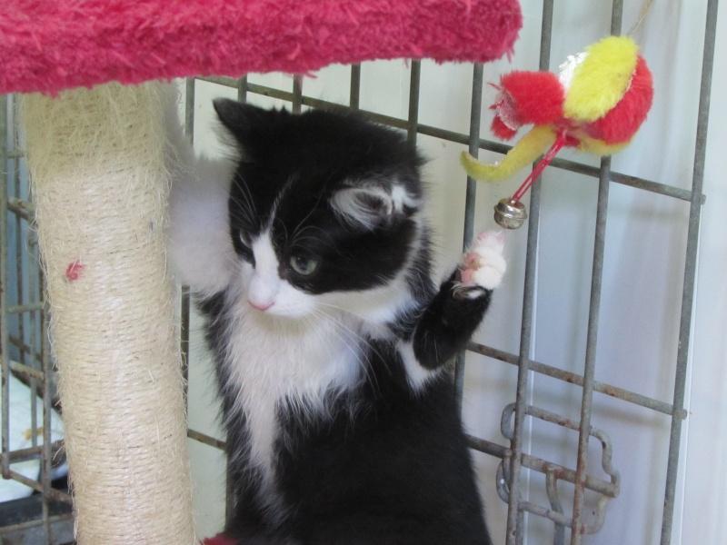 Adoption de LILA - 12 octobre 2015. 0371510
