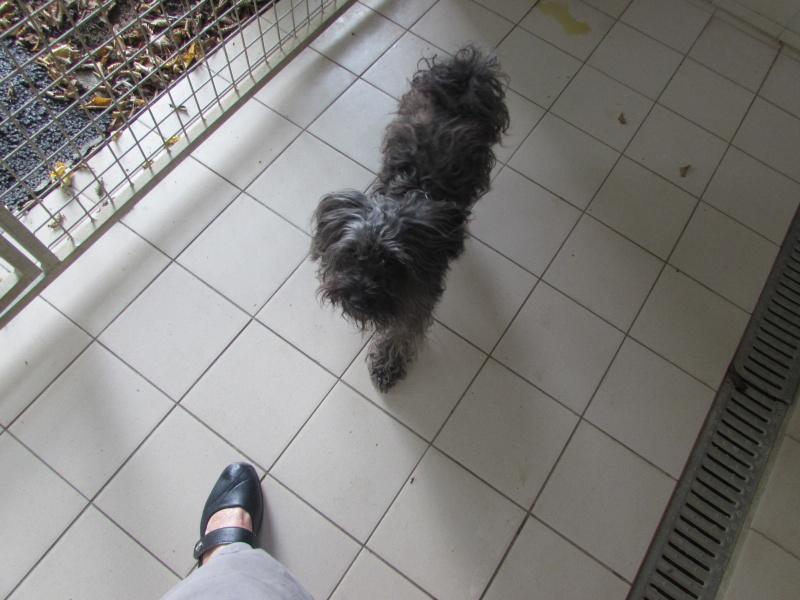 GASPAR chien 04112