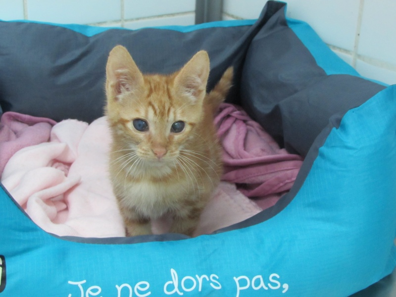 Adoption de FLORY et HAPPY 0461010