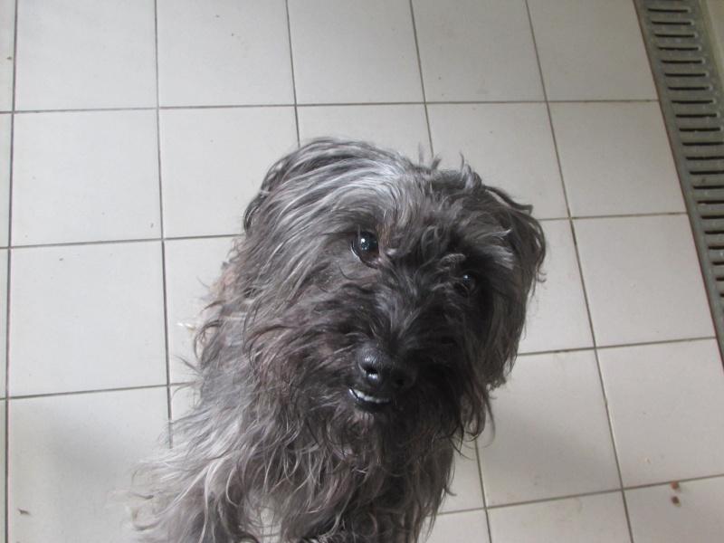 GASPAR chien 05110