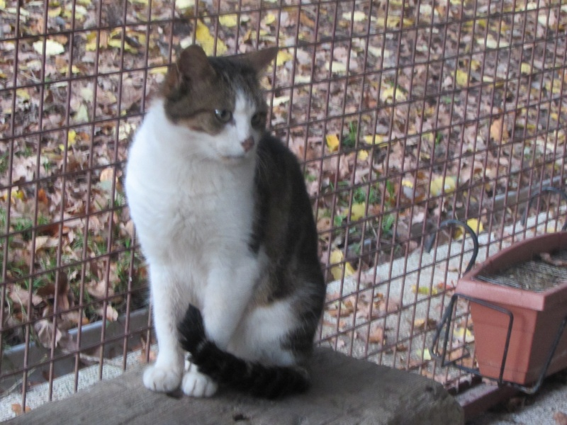 GEDY le chat Img_8422