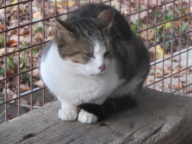 GEDY le chat Img_8423
