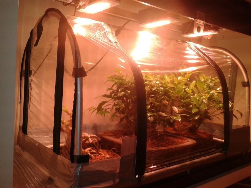 Indoor Bonsai under LED lights. - Page 10 20151010