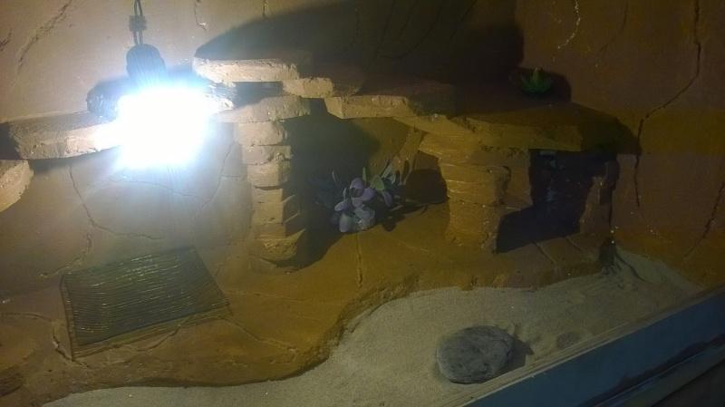 Le nouveau terrarium que mon pote est occupé a construire pour ses petiots 11703210