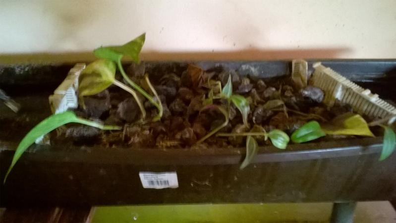 Mauremys sinensis Wp_20123