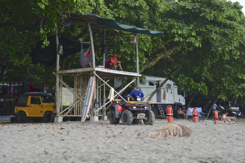 Les palathéo au Costa Rica Dsc_7911