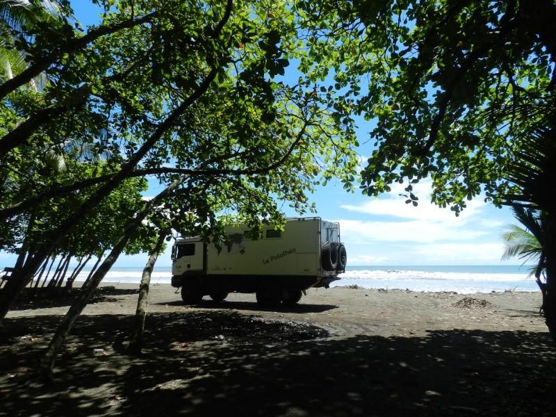 Les palathéo au Costa Rica Dscn6610