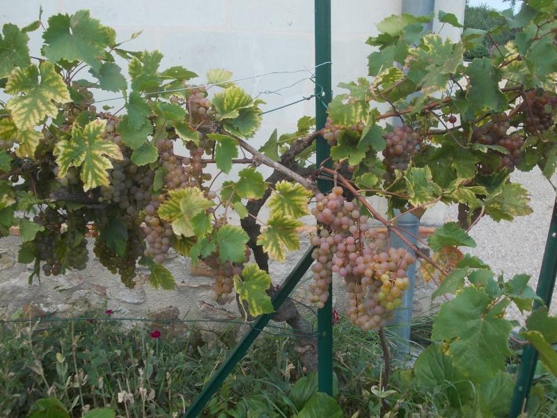 Avez-vous une vigne ? Dscn6718