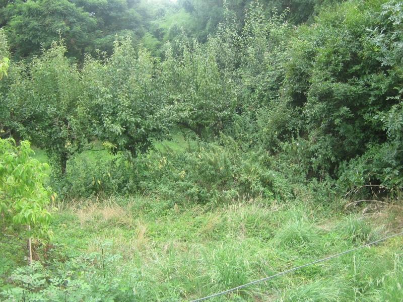 Les aventures de Stratocasseur - Il faut cultiver notre jardin Img_0114