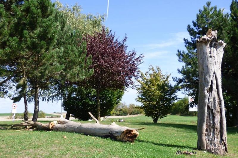 L'arbre du pendu de Rethel. 11949410
