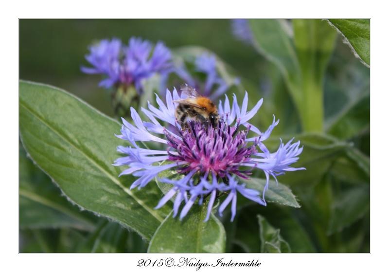 Les abeilles. Cadre188