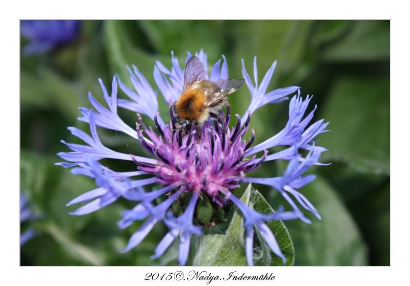 Les abeilles. Cadre190