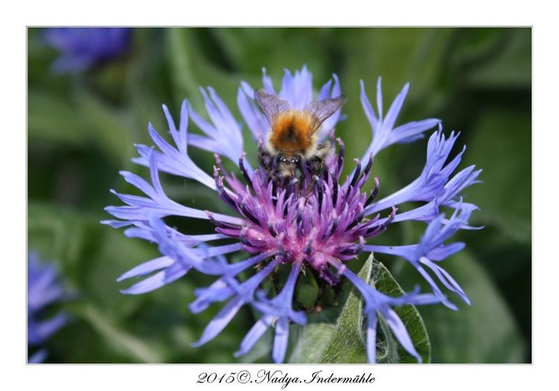 Les abeilles. Cadre191