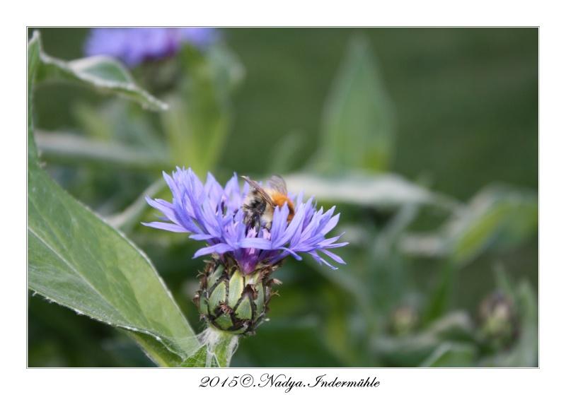 Les abeilles. Cadre193
