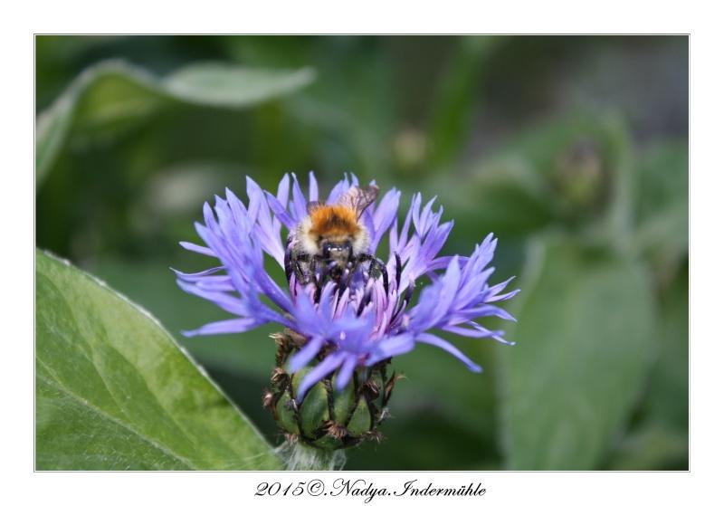 Les abeilles. Cadre194