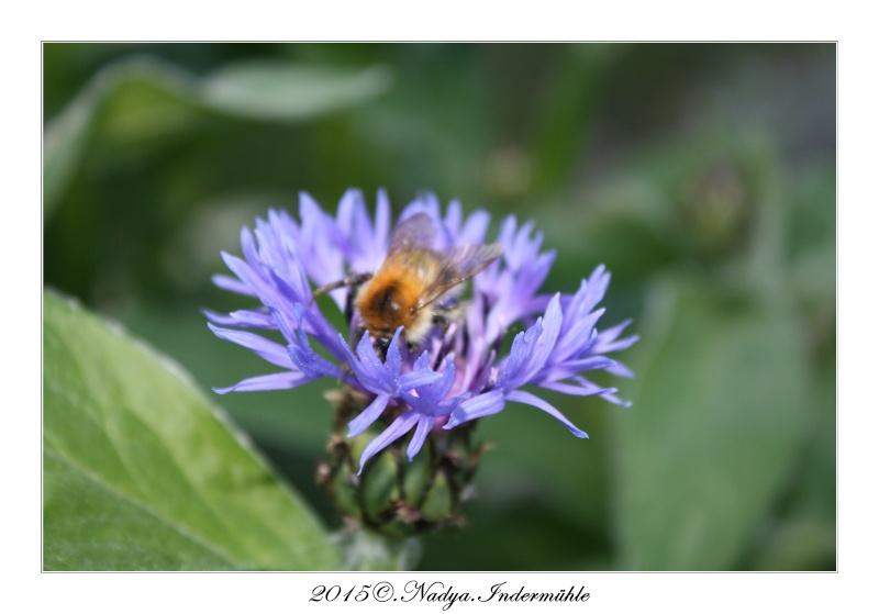 Les abeilles. Cadre195