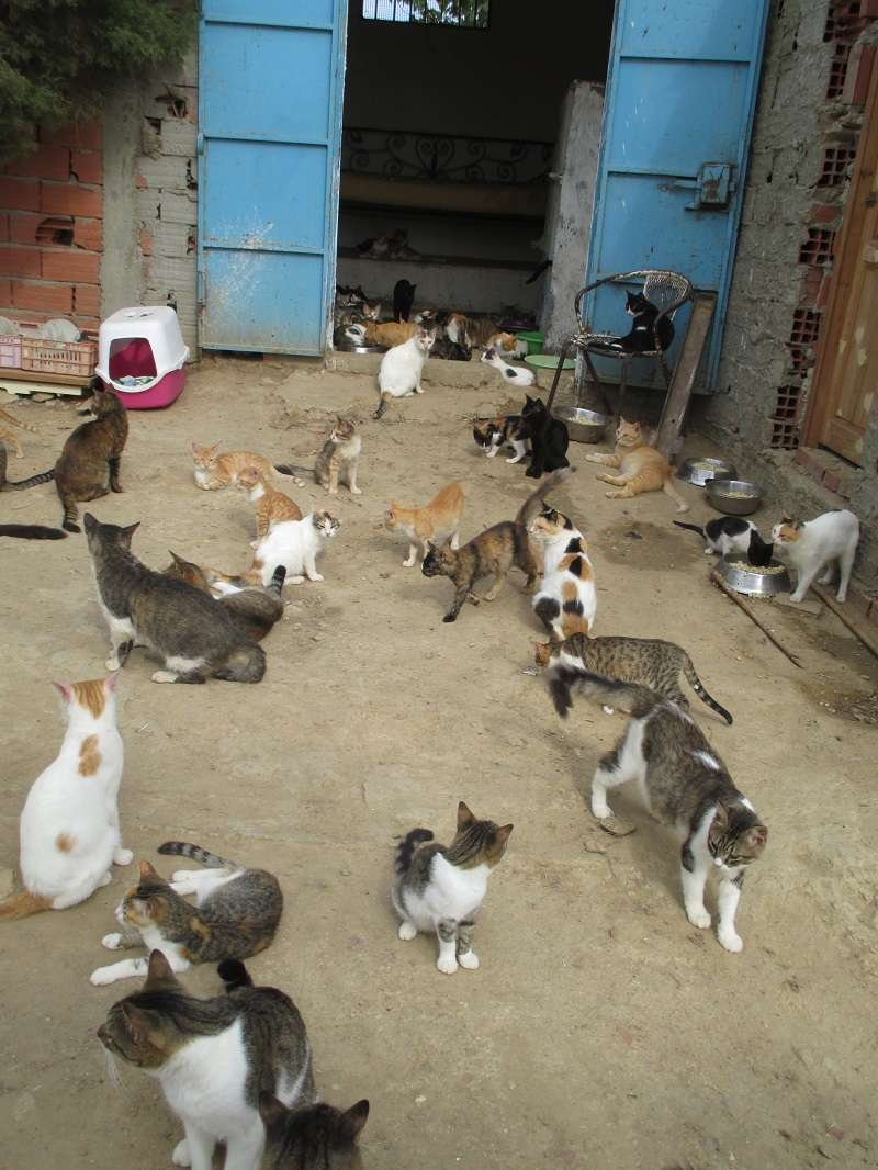 Association PAT (Protection Animaux de Tunisie) Chats-10